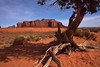 Juniper at Sand Springs (Gary Tompkins) Tags: monumentvalley sandsprings