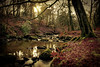 River of Dreams (xDigital-Dreamsx) Tags: landscape water river trees sunlight sunset sunshine sun sundown sunny forest woodland nature naturephotography rocks tranquility mood atmosphere red yellow green grass bush shrub reflection shadows outside naturethroughthelens coth5 autumn ngc