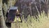 9Q6A9954 (2) (Alinbidford) Tags: alancurtis alinbidford birdofprey brandonmarsh kestrel nature wildbirds wildlife