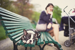 Hurry up, I'm bored (Eddie HBH) Tags: dog pets paris france parks streetphotography leica summilux 35mm bench bored phone