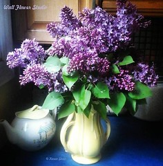 Lilacs in the kitchen (Karen @ Wall Flower Studio) Tags: wallflowerstudio lilacs syringiavulgaris karensloan flowers scent perfume may 2018 blooms vintage mccoy vase floralarrangement cutflowers kitchen perennial lilacflowers