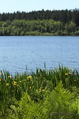 WA_1512_Black Lake (jedibob) Tags: black lake olympia washington scenic outdoors nature