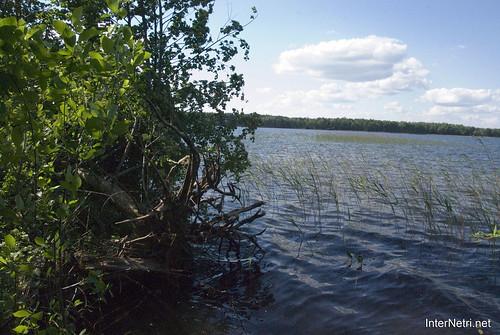 Шацький Національний Природний Парк Озеро Пісочне Берег InterNetri  Ukraine 168