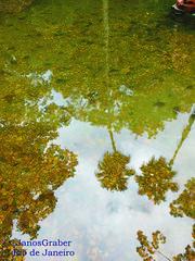 Água (Janos Graber) Tags: reflexo água jardimbotânico jardimbotânicodoriodejaneiro riodejaneiro