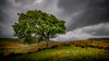 Storm ... (Einir Wyn Leigh) Tags: landscape storm weather rain tree clouds dark outside wales light colorful uk hiking walk