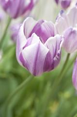 (jvh83) Tags: jardinbotanico realjardinbotanico botanicalgarden madrid spain 29042018