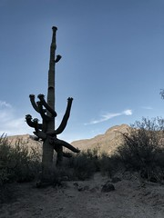 IMG_3331 (adrien.boublil) Tags: arizona roadtrip usa cowboy western photography grandcanyon phoenix tucson saguaro sinagua horses monumentvalley johnwayne petrifiednationalforest canyondechellynationalmonument antelopecanyon flagstaff harkins poncho meteorcrater landscapes