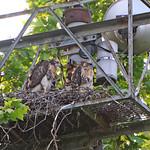 GT Hawk Nest - 0467 thumbnail