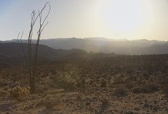 Ocotillo desert sunset (brian.magnier) Tags: california desert nature landscape sunset light cactus ocotillo wide