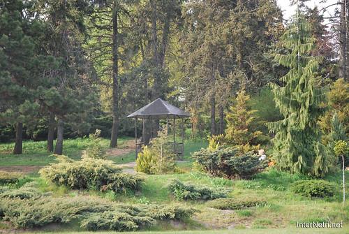 Ботанічний сад імені Гришка Цвітуть магнолії InterNetri  Ukraine 180