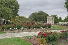 D75_3473 (joezhou2003) Tags: huntington rose garden architecture nikon d750 24120mm vr