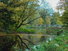 Shugborough reflections (eliserichards) Tags: shugboroughestate shugborough nationaltrust shades vibrant colour green bridge trees reflection reflections