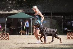 Dog show (zola.kovacsh) Tags: outdoor animal pet dog dobermann doberman pinscher