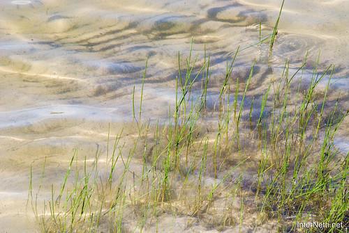 Шацький Національний Природний Парк Озеро Пісочне Прозора вода InterNetri  Ukraine 262