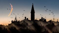 Rovinj Skyline and a Sunlit Contrail (Bernd Thaller) Tags: rovinj istarskažupanija kroatien hr contrail sun evening sky silhouette birds houses buildings church tower black blue orange skyline christianity