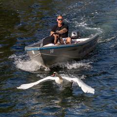 Morons chasing a swan (Stig Nygaard) Tags: creativecommons 2017 photobystignygaard 7d 7dii 7d2 7dmarkii canoneos7dmarkii copenhagen cph danmark denmark dänemark dk københavn köpenhamn köbenhavn copenhague canonefs1585mmf3556is idiots morons swan boat motorboat chasing christianshavn copenhagenharbour copenhagencanals bird muteswan cygnusolor canals canal channel cuw22 dnk canonefs1585mmf3556isusm