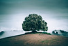My Tuscan tree (Airpixelsmedia) Tags: landscape nature tree forest lonely italy toscana tuscany val d orcia