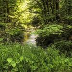 Willow Creek (Ulysses, NY) thumbnail