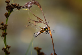 wake up dragonfly