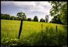 Field (Falcdragon) Tags: zeissloxia2821 liège liege belgium walking woodland sonya7riialpha ilce7rm2