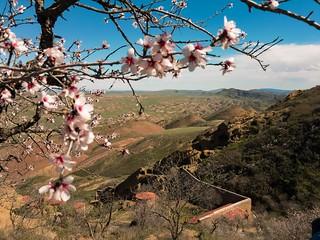 Springtime in David Gareja monastery complex