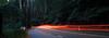 Light trails on the Black Spur (Paul Threlfall) Tags: theblackspur victoriaaustralia lighttrails car forest ferns mountainash drive dicksoniaantarctica treeferns eucalyptusregnans
