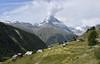 Le Cervin en éruption ??? The Matterhorn in eruption ??? (Annelise LE BIAN) Tags: cervin suisse zermatt montagnes matterhorn explore coth sunshine coth5 damn