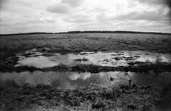 La Kampina (Der Ohlsen) Tags: lasardina bellestarr analog 35mm kb bw film agfaapx100 kampina oisterwijk niederlande netherlands