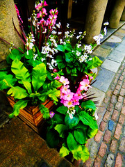 The Flowers of Covent Garden (Steve Taylor (Photography)) Tags: flowers coventgarden column art digital architecture contrast block brick uk gb england greatbritain unitedkingdom london plant flower planter leaves