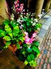 The Flowers of Covent Garden (Steve Taylor (Photography)) Tags: flowers coventgarden column art digital architecture contrast block brick uk gb england greatbritain unitedkingdom london plant flower planter leaves