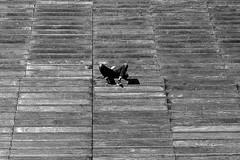 The head on the pants (pascalcolin1) Tags: paris13 homme man escalier stairs staircase tête head pantalon pants photoderue streetview urbanarte noiretblanc blackandwhite photopascalcolin 50mm canon50mm canon