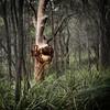 Suffered (Bass Photography) Tags: kuringgainationalpark tree burr treeburr forest national park nswnationalparks australia sydney newsouthwales trees gumtree
