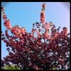 Lente (Willo Eurlings) Tags: boom bloesem lente hipstamatic
