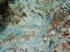 Goby (R. Donald Winship Photography) Tags: aquaticlife chankanaabreef cozumel divingunderwater sandcanyongoby