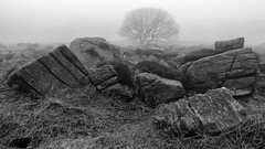 NB-6.jpg (neil.bulman) Tags: countryside longshawestate tree peakdistrict nature nationalpark derbyshire longshaw trees rocky rocks sheffield england unitedkingdom gb