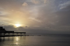 Pastel sky at sunset with a starling trail (karen leah) Tags: starlings pier sunset aberystwyth ceredigion cardiganbay dusk twilight outdoors sea shore clouds sky beauty nature march