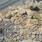 Sponges in situ thumbnail