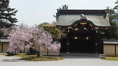 Spring Gate (maco-nonch★R) Tags: japanischer japanesephotographer japon japonés japanese japón 日本 京都 kyoto kioto temple tempel tempo cherryblossoms sakura weeping cherrytree pink jardín