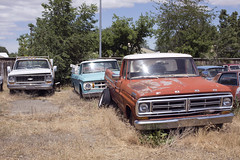 Big Three (Curtis Gregory Perry) Tags: vale oregon truck ford chevy dodge chevrolet pickup old junker beater classic vintage red blue white american vehicle rusty nikon d810 parking lot d100 f100 f150 c10 c20 1967 1966 1973 1970 grille bumper weeds grass overgrown debris rust spare tire windshield tree sky car field automóvil coche carro vehículo مركبة veículo fahrzeug automobil
