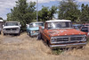 Big Three (Curtis Gregory Perry) Tags: vale oregon truck ford chevy dodge chevrolet pickup old junker beater classic vintage red blue white american vehicle rusty nikon d810 parking lot d100 f100 f150 c10 c20 1967 1966 1973 1970 grille bumper weeds grass overgrown debris rust spare tire windshield tree sky car field