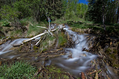 Small waterfall (begineerphotos) Tags: stream springs bighillsprings alberta water tree trees creek grass log
