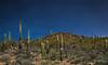 Full Moon - Saguaro Cactus landscape (Turk Images) Tags: fullmoon nightexposure saguaronationalparktucsonmountaindistrict timeexposure arizona cactus desert landscape nightscape tucson winter