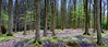 Spring (ianmiddleton1) Tags: spring wood woodland green leaves panorama
