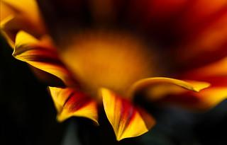A Fiery Beauty