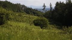 Widok z gór Bystrzyckich  na Masyw Śnieżnika (Król Paweł) Tags: helios442 landscape krajobraz góry sony m42 helios green manuallens