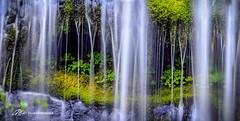 Closer (Matt Straite Photography) Tags: waterfall water stream river life clover nature landscape washington canon zoom detail details