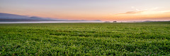 ile 2018-80 (Tasmanian58) Tags: field fog mist landscape batis batis2818 zeiss quebec canada orleansisland