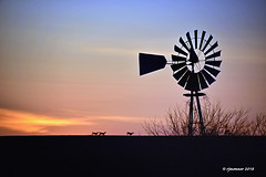 Twilight Run_187026 (rjmonner) Tags: windmillwednesday iowa rural country relic deer silhouette blades midwest agriculture agronomic orange blue nature wild run twilight
