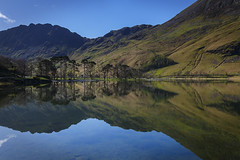 Buttermere Pines (Paul.Coote) Tags: blue cloud colour crag cumbria fell grass haystacks lake lakedistrict landscape light mountain mountainside mountainridge nature outdoor plant reflection ridge rock rockformation sky summit trees water england uk