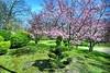 Japanese gardens in Hasselt, Belgium (jackfre 2) Tags: belgium hasselt japanesegardens cherrytrees ponds nonzaitrees trees teahouse bridges